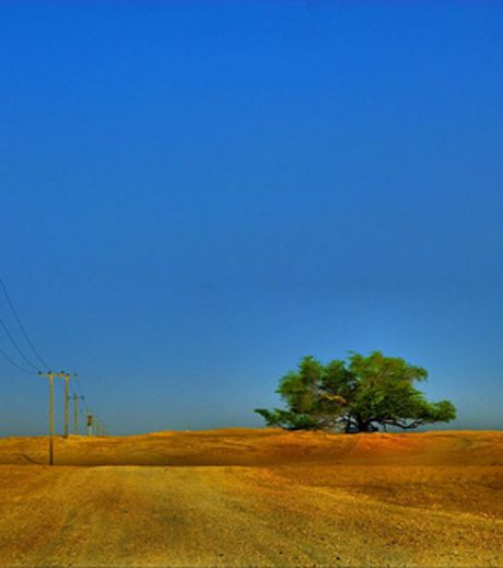 l-arbre-de-vie-du-bahrein-mystere-de-la-nature-credit-photo.jpg