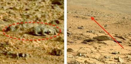 Photo d'un animal sur la planète MARS ?