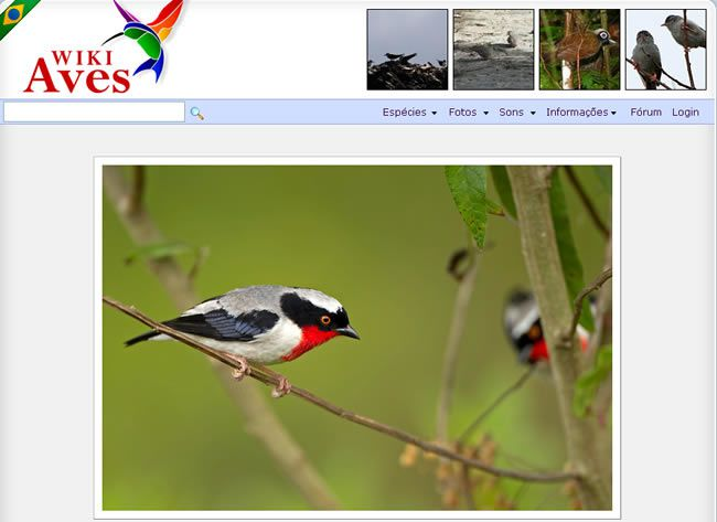 wikiaves