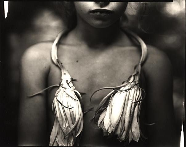 Night-Blooming-Cereus--1998--Sally-Mann.