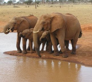 elephants-au-point-d-eau.jpg