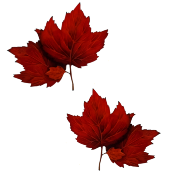 10042012 feuille rouge
