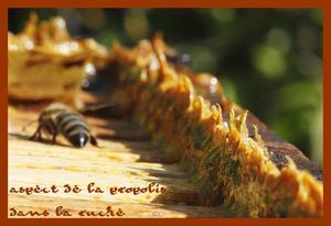 800px_Propolis_in_beehives