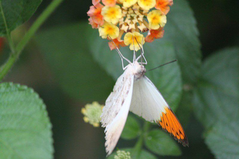 Paradis des papillons (25)