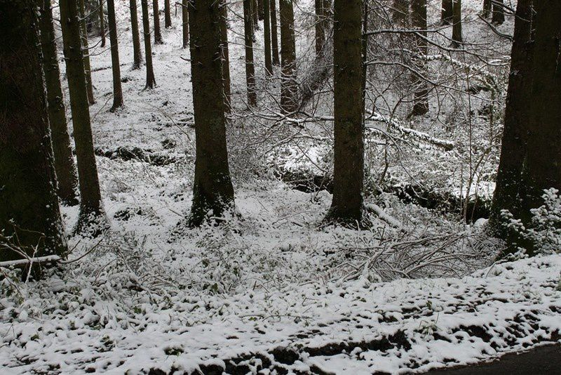 Neige en Monts d'Arrée 092