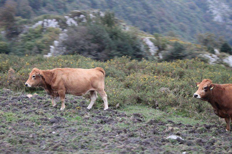 5 Sur la route du lac de Covadonga (18)