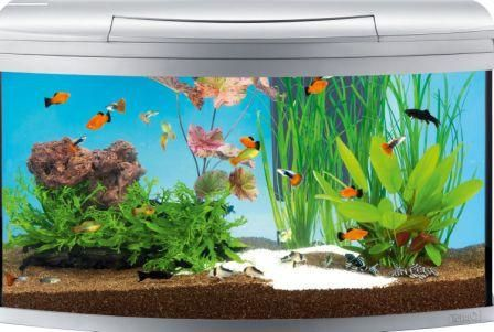 Aquarium avec poisson for Deco aquarium poisson