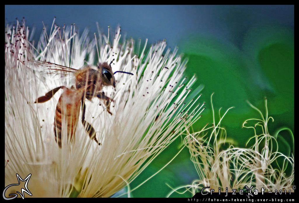 Animaux et insectes en tous genres.