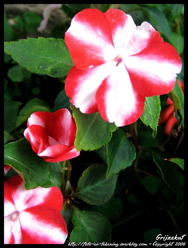 Fleurs, plantes et autres végétations...