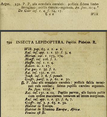Papilio-idas-Linne-SN12.png