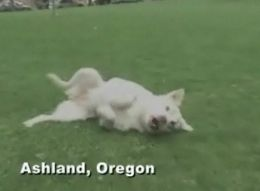 hallie-akita-survives-1000-foot-fall2