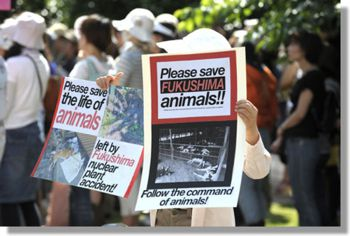save-the-fukushima-animals