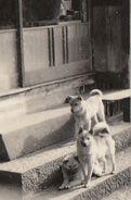 sanin-shiba-archives