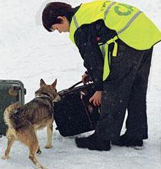 sulimov-dog-chien1