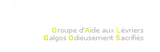 logo-asso-galgos.png