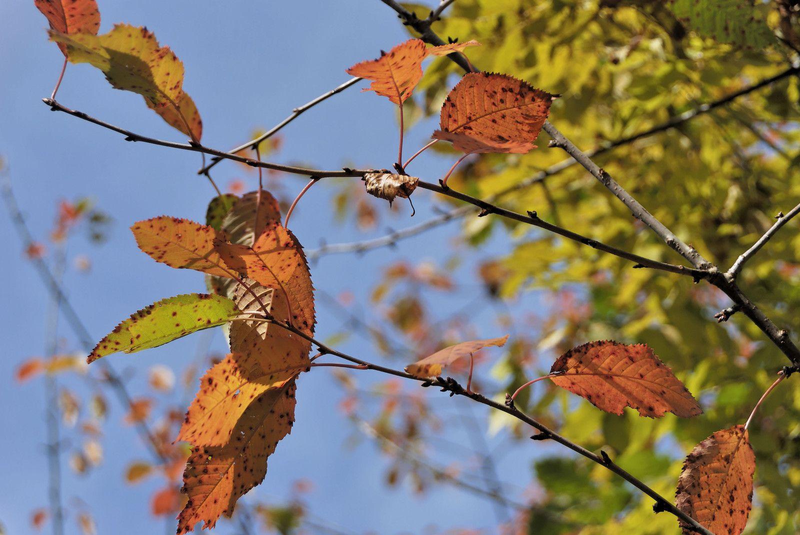 automne5 DxO
