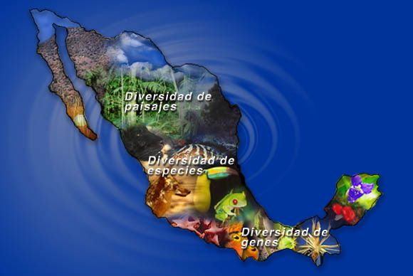 mapa-BIODIVERSIDAD.jpg