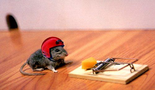 extreme sport mouse