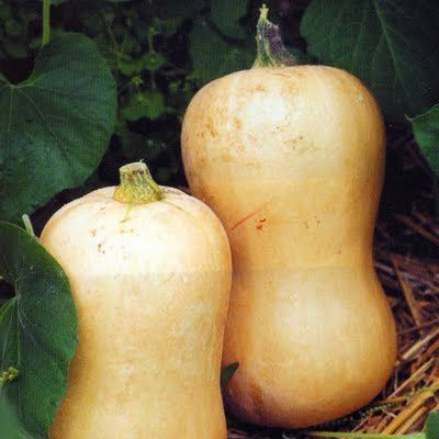 courge_butternut5.jpg