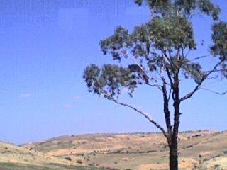 belle-arbre.jpg