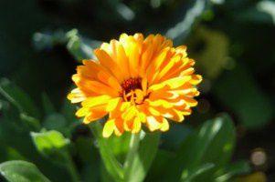jardin-en-fleurs 0541 [320x200]