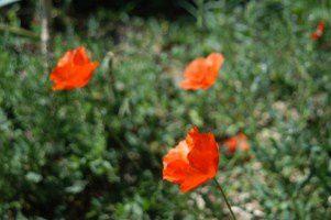 jardin-en-fleurs 0545 [320x200]