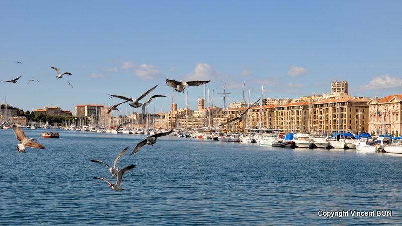 PHOTOPUS-N-13-Vieux-Port-de-Marseille.JPG
