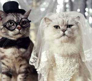 funny-wedding-pictures-pets