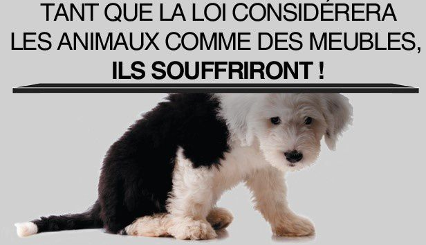 Amis animaux le rupellien for Porte de champerret salon chiens chats