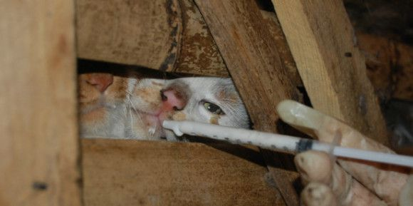 chats-cage-1.jpg