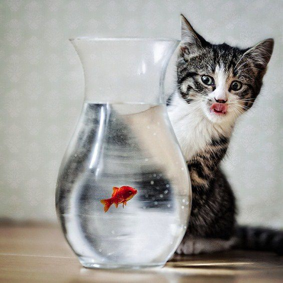 chat-poisson.jpg