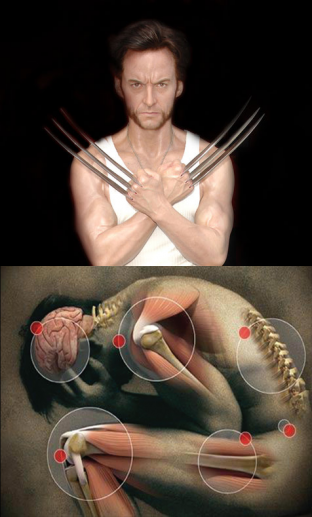 noticia-wolverine.png2.png