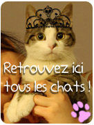 bouton-chat.PNG
