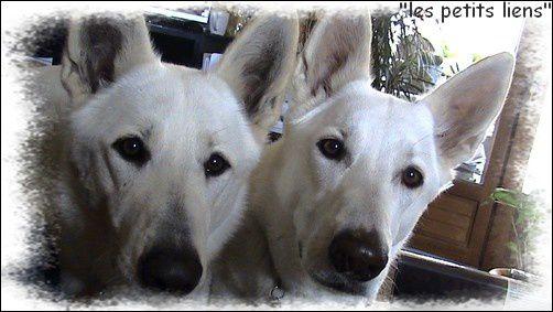 Portrait chiens