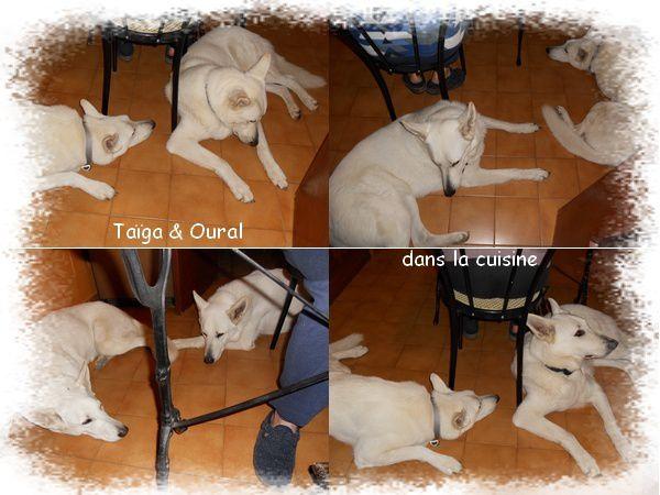 Taiga---Oural-dans-la-cuisine_GF.jpg