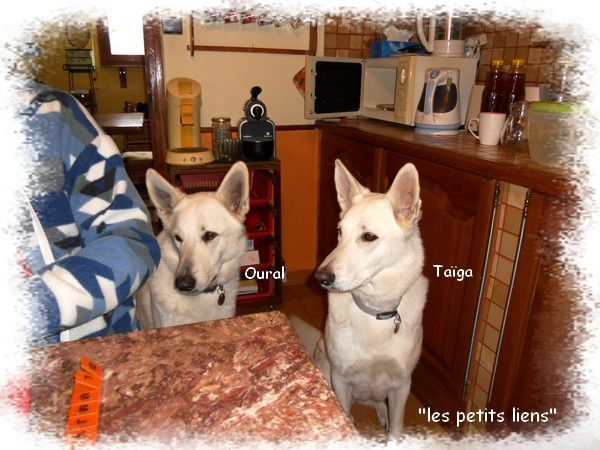 chiens-table-cuisine-betise.jpg