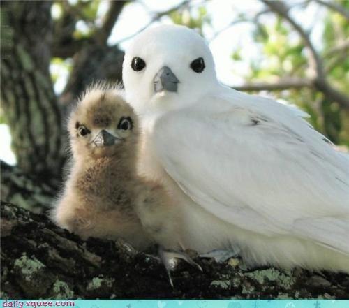 p_oiseau.jpg
