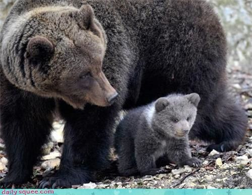 p_ours-ourson.jpg
