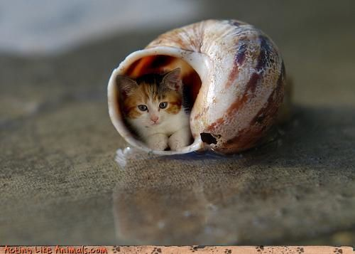 chaton-dans-coquille.jpg