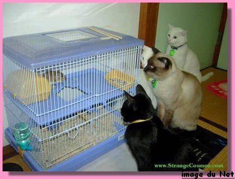 chats-cage-souris-pf.jpg