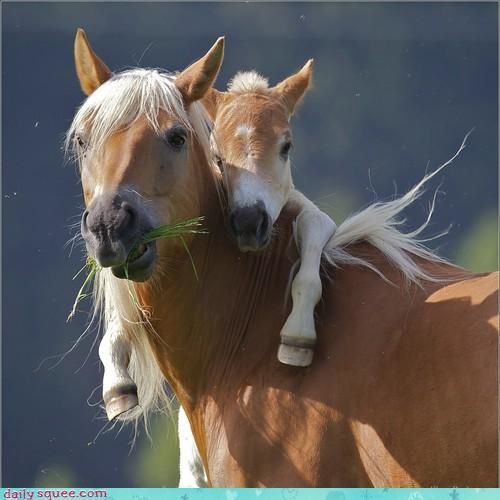 jument-poney.jpg