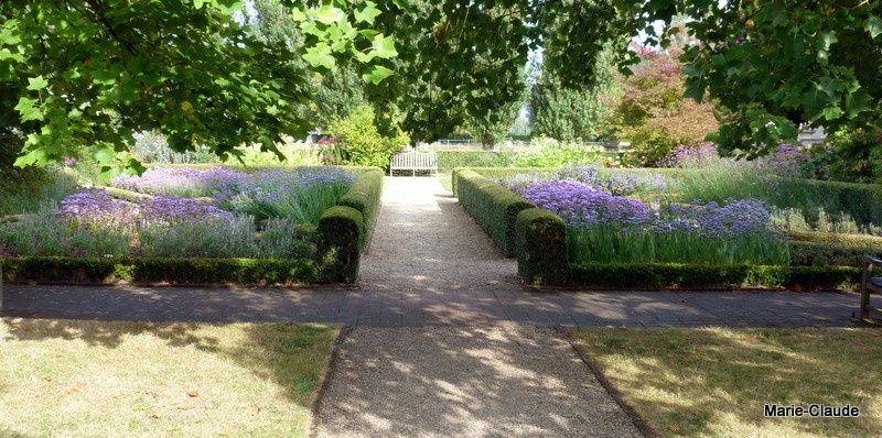Les jardins du nouveau monde un p 39 tit coin de nature for Jardin a l americaine