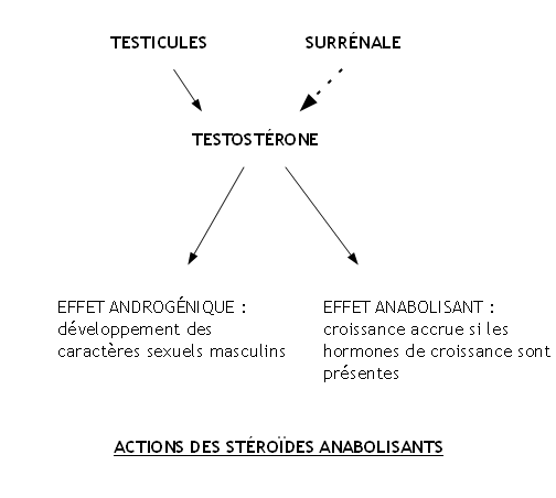 TPE---Steroides.png