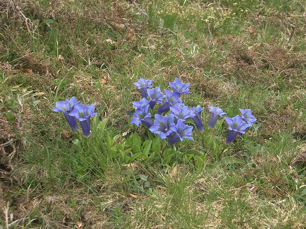 Connaissez-vous ces fleurs ?
