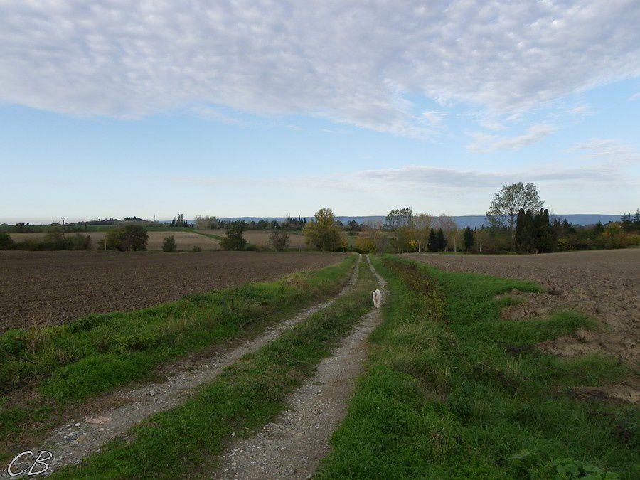 Villasavary le chemin des canonges 13 11 2012