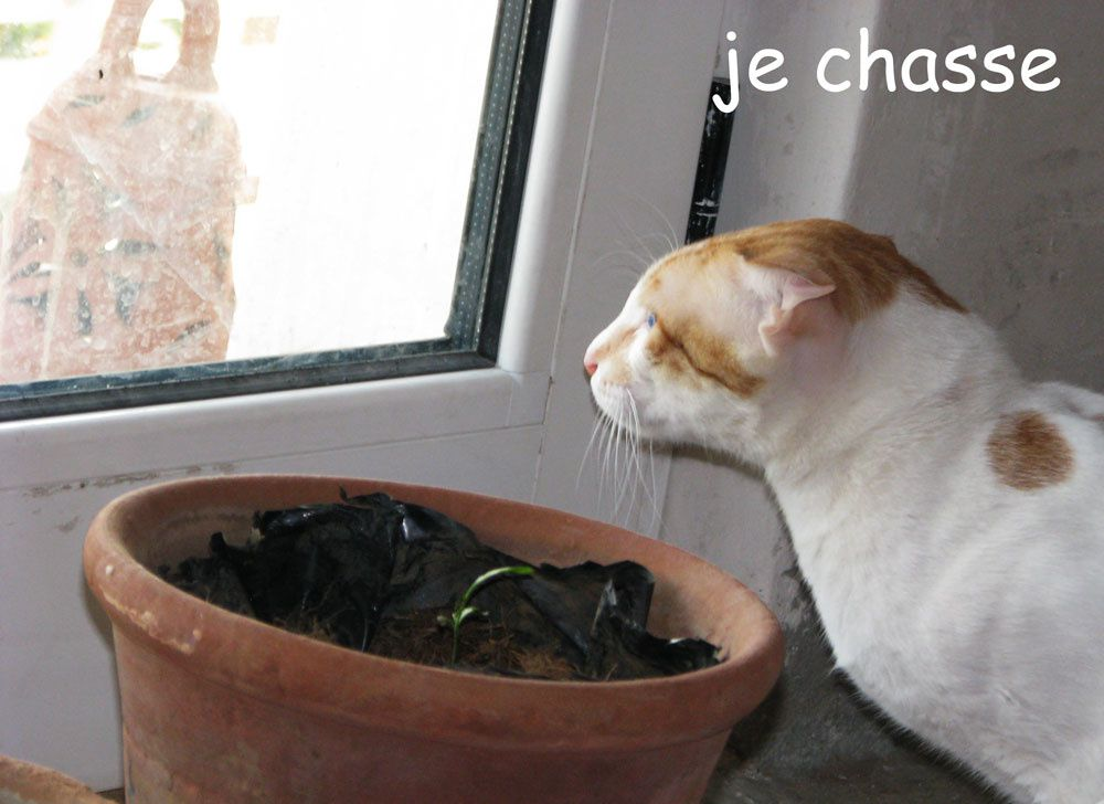 12 06 chasse