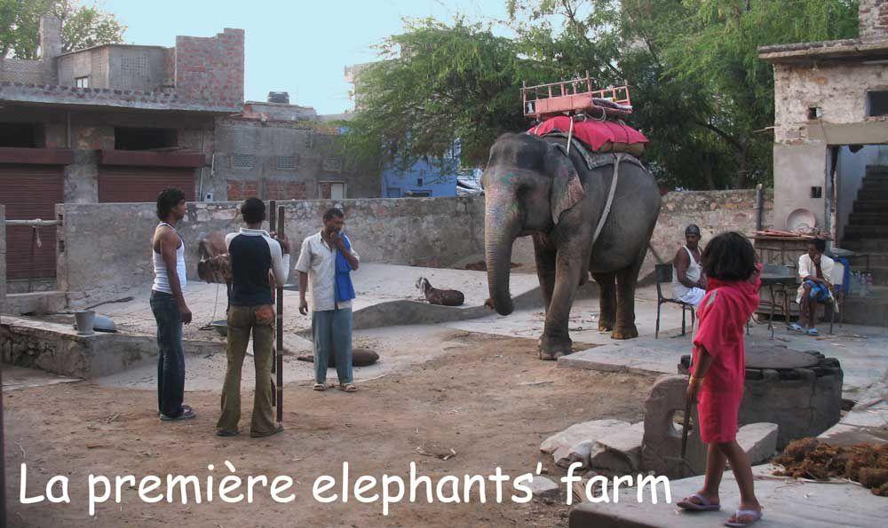 La première ferme d'éléphants