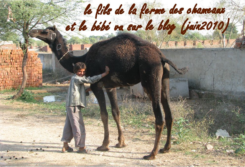 le fils de la ferme des chameaux