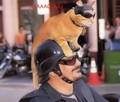 chat-a-lunette-moto.jpg