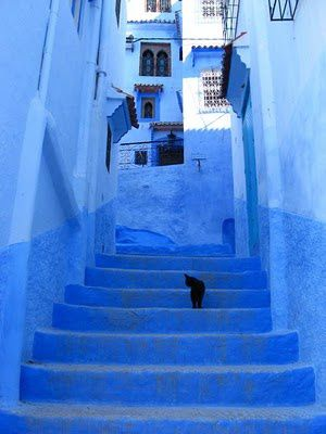 Morocco---blue-alley-and-black-cat.JPG